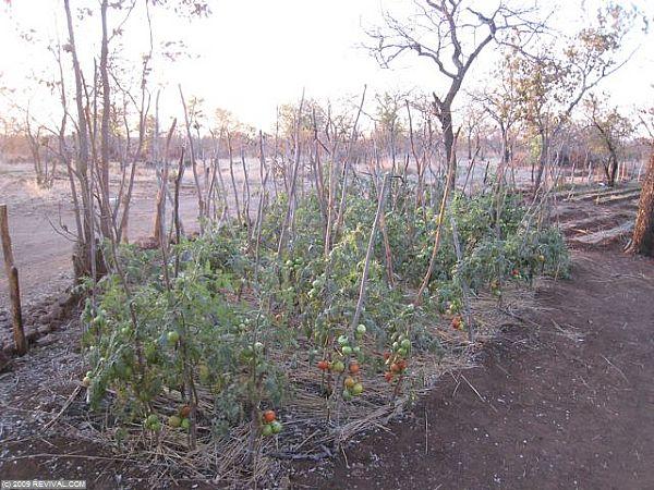 Zambia - 32.jpg (Large)